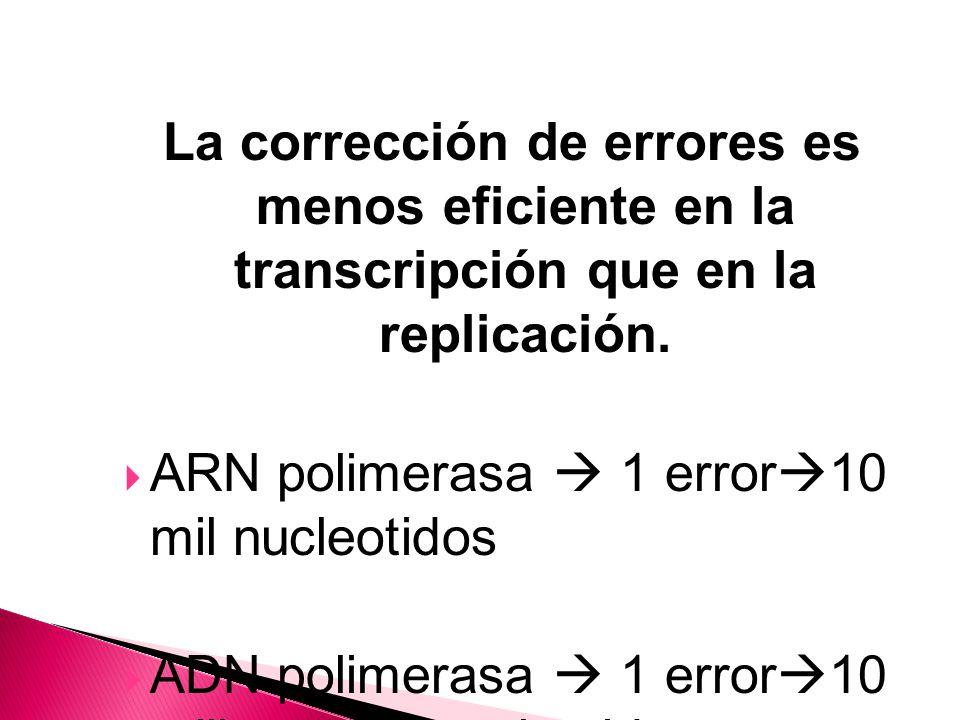 La corrección de errores es menos eficiente en la transcripción que en la replicación.