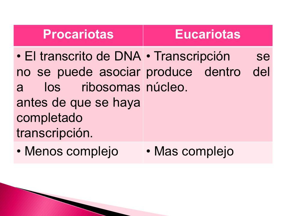 Procariotas Eucariotas. El transcrito de DNA no se puede asociar a los ribosomas antes de que se haya completado transcripción.