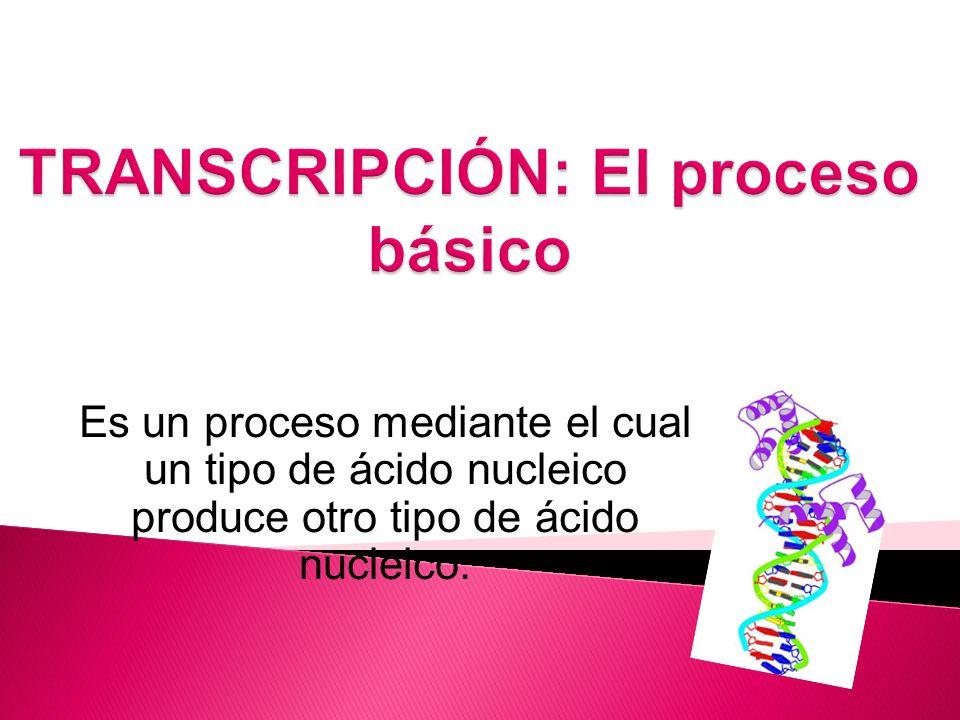 TRANSCRIPCIÓN: El proceso básico