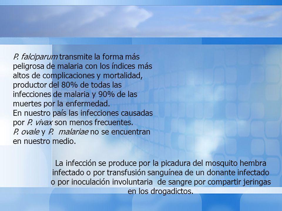 P. falciparum transmite la forma más peligrosa de malaria con los índices más altos de complicaciones y mortalidad, productor del 80% de todas las infecciones de malaria y 90% de las muertes por la enfermedad.
