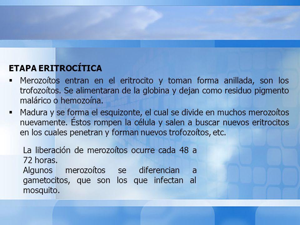 ETAPA ERITROCÍTICA