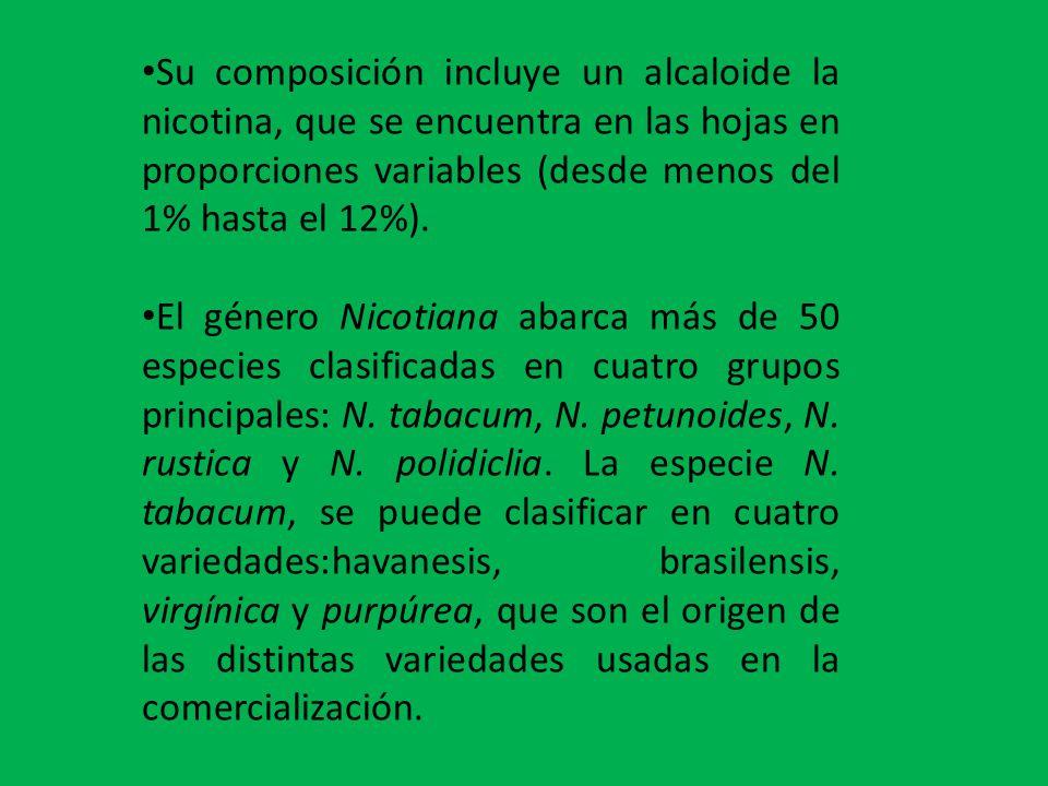 Su composición incluye un alcaloide la nicotina, que se encuentra en las hojas en proporciones variables (desde menos del 1% hasta el 12%).