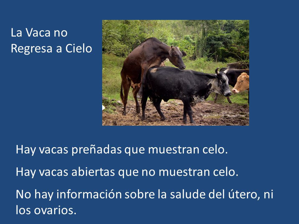 La Vaca no Regresa a Cielo