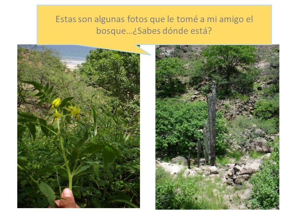 Las Plantas en el Bosque Seco