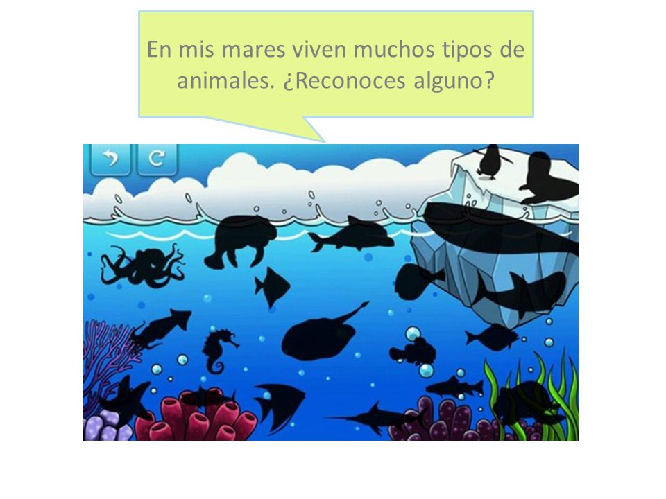 En mis mares viven muchos tipos de animales. ¿Reconoces alguno