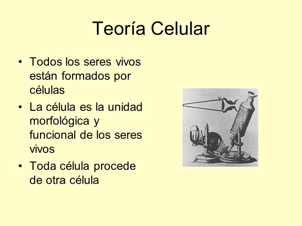Teoría Celular Todos los seres vivos están formados por células
