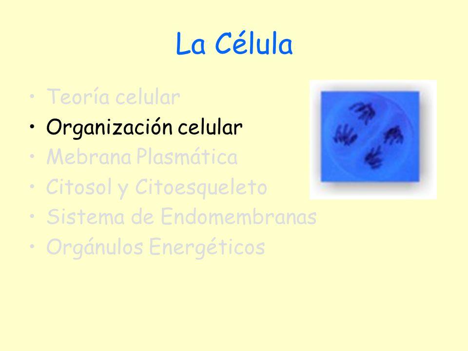 La Célula Teoría celular Organización celular Mebrana Plasmática