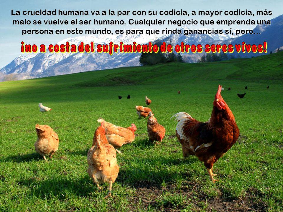 ¡no a costa del sufrimiento de otros seres vivos!