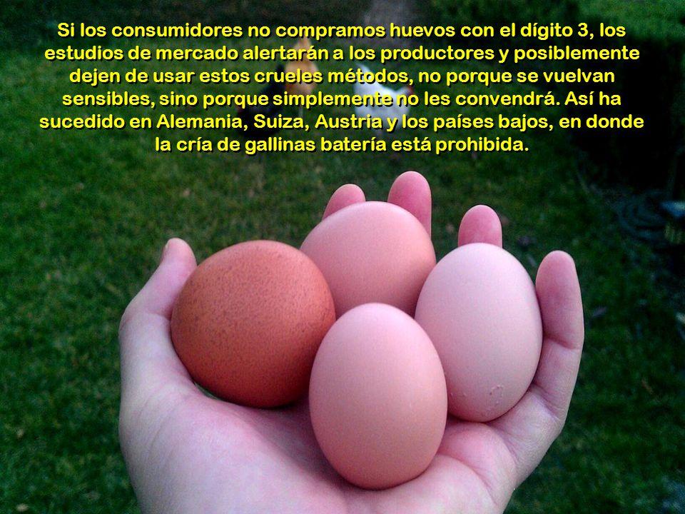 Si los consumidores no compramos huevos con el dígito 3, los estudios de mercado alertarán a los productores y posiblemente dejen de usar estos crueles métodos, no porque se vuelvan sensibles, sino porque simplemente no les convendrá.