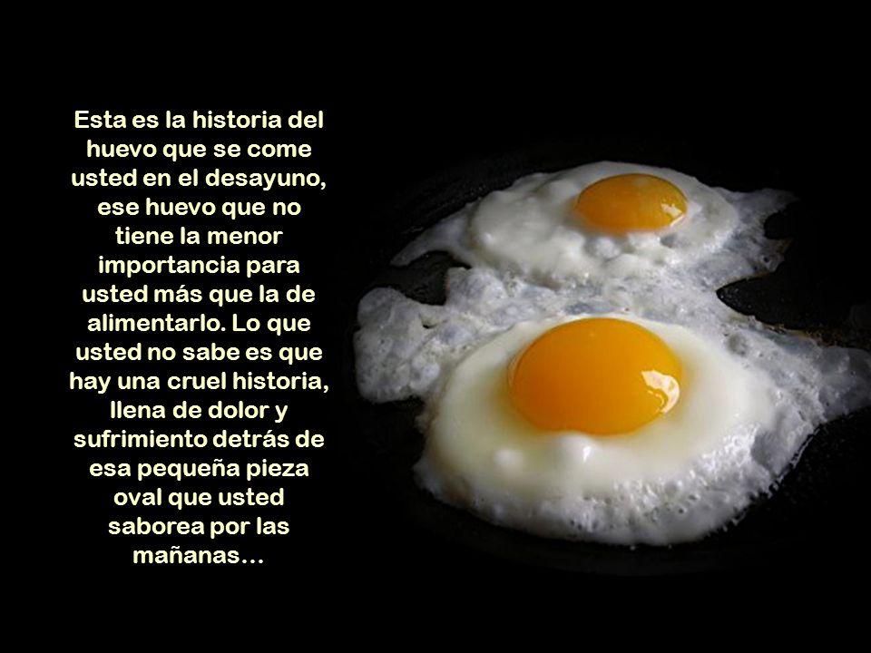 Esta es la historia del huevo que se come usted en el desayuno, ese huevo que no tiene la menor importancia para usted más que la de alimentarlo.