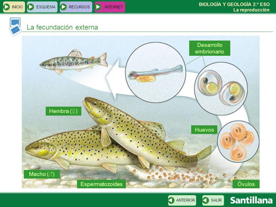 Esquema inicio esquema recursos internet lectura inicial for La reproduccion de los peces
