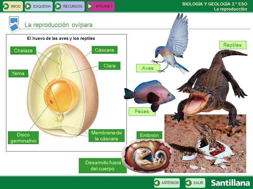 El huevo de las aves y los reptiles