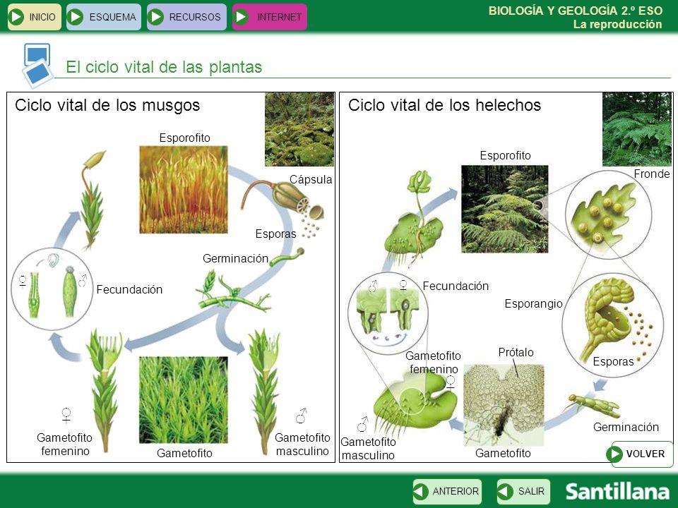 El ciclo vital de las plantas