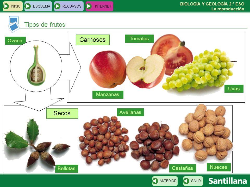 Tipos de frutos Carnosos Secos Tomates Ovario Uvas Manzanas Avellanas
