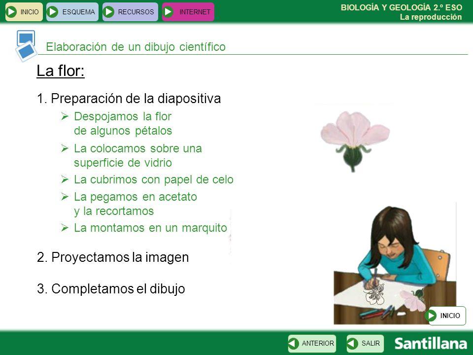 La flor: 1. Preparación de la diapositiva 2. Proyectamos la imagen