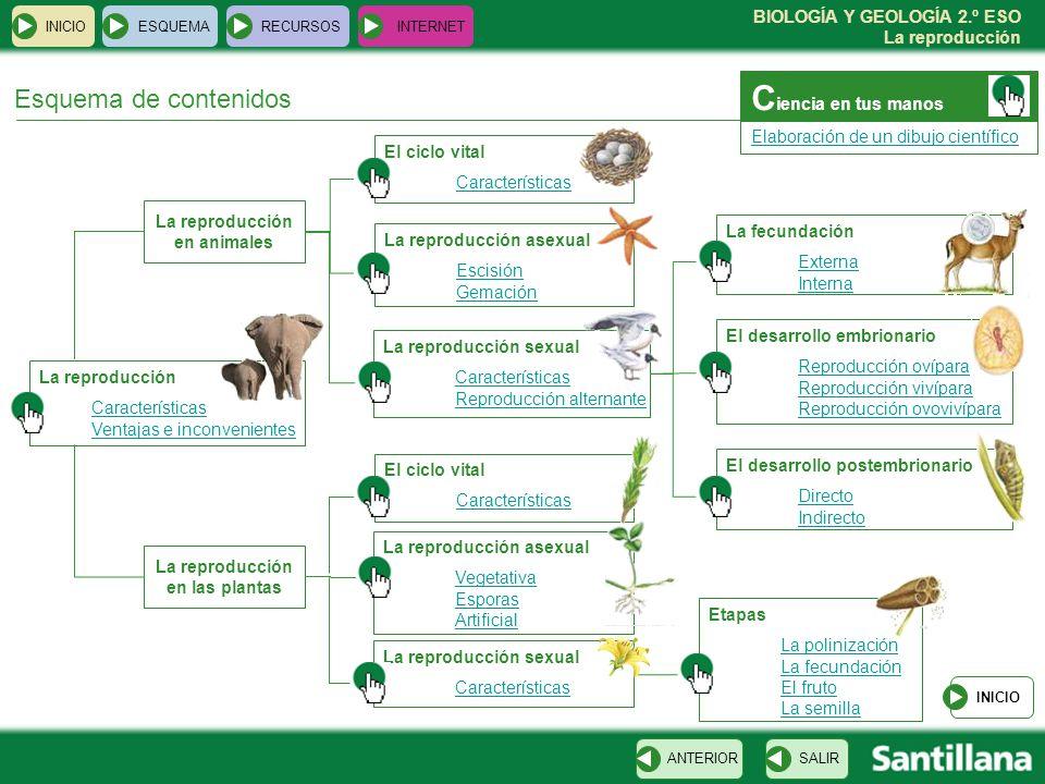 La reproducción en animales La reproducción en las plantas