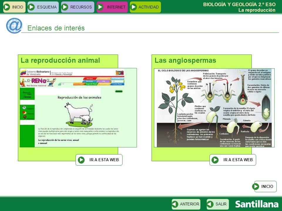 La reproducción animal Las angiospermas