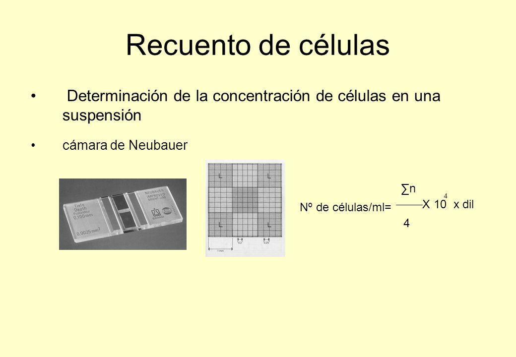 Recuento de células Determinación de la concentración de células en una suspensión. cámara de Neubauer.