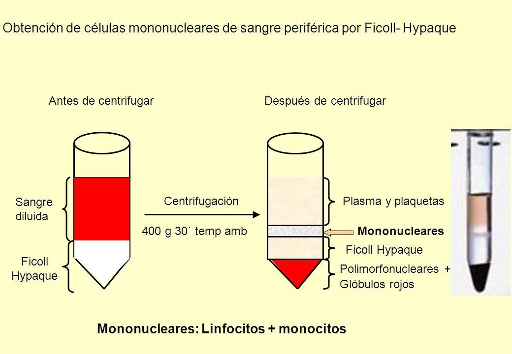 Mononucleares: Linfocitos + monocitos
