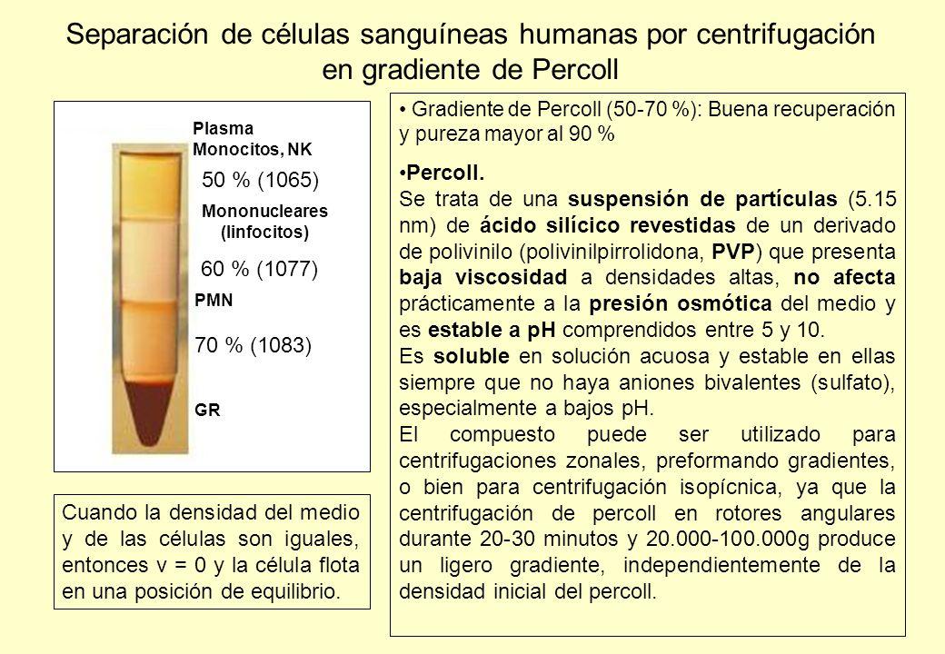 Mononucleares (linfocitos)