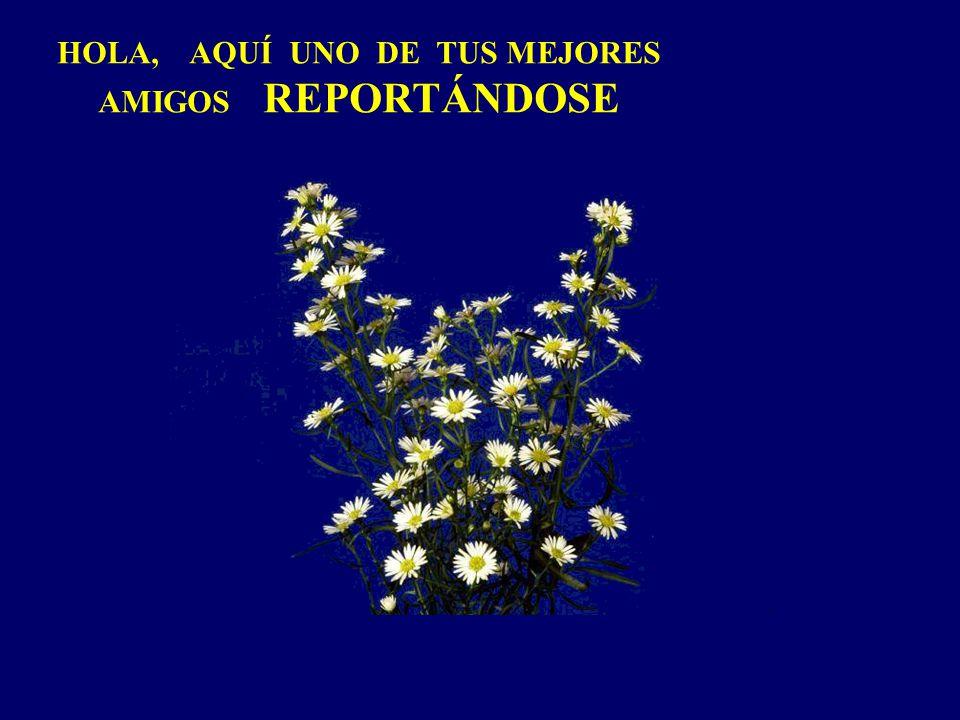 HOLA, AQUÍ UNO DE TUS MEJORES AMIGOS REPORTÁNDOSE