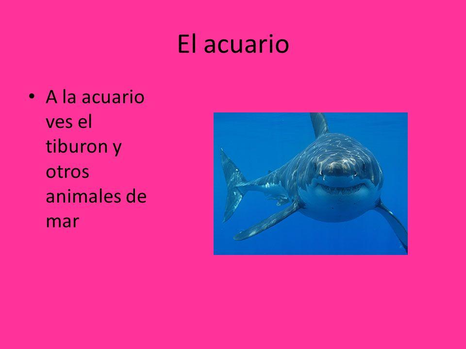 El acuario A la acuario ves el tiburon y otros animales de mar