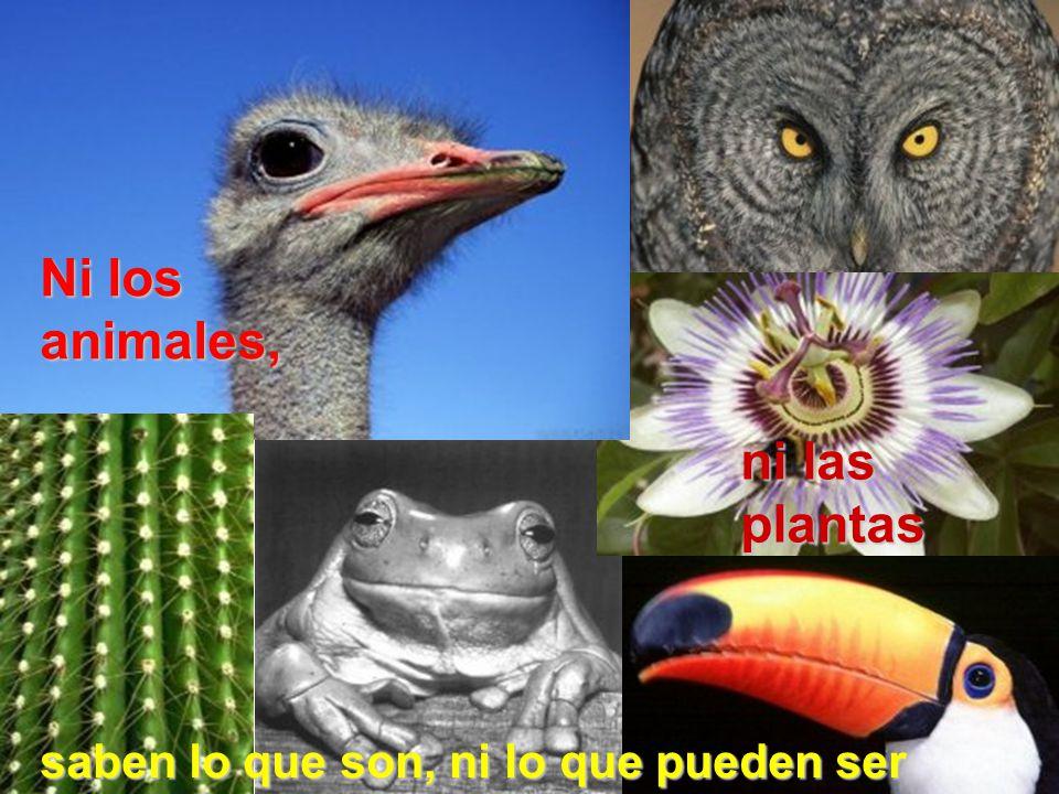 Ni los animales, ni las plantas saben lo que son, ni lo que pueden ser