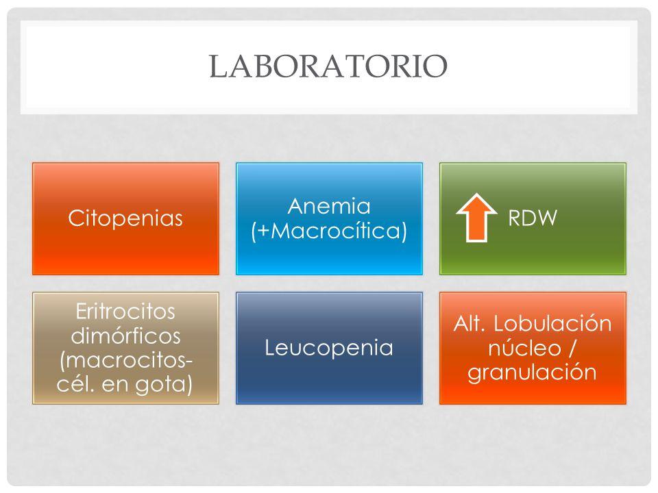 Laboratorio Citopenias Anemia (+Macrocítica) RDW