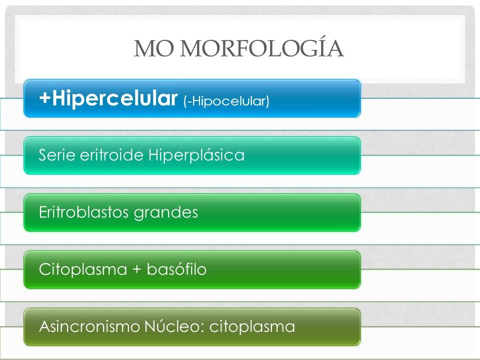 MO Morfología +Hipercelular (-Hipocelular)