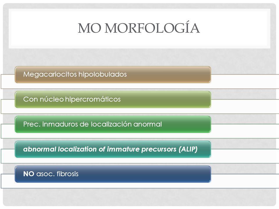 MO Morfología Megacariocitos hipolobulados Con núcleo hipercromáticos
