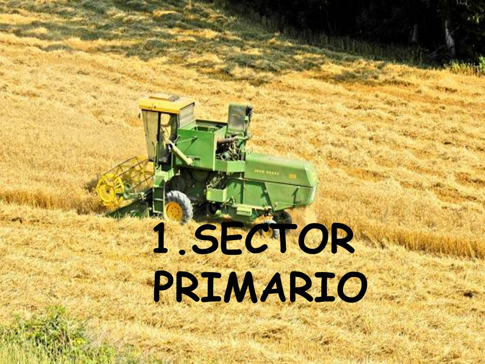 1.SECTOR PRIMARIO