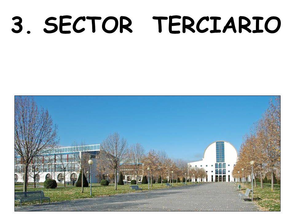 3. SECTOR TERCIARIO