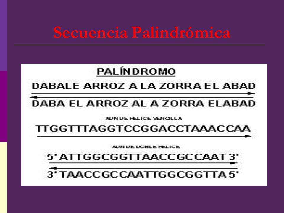 Secuencia Palindrómica