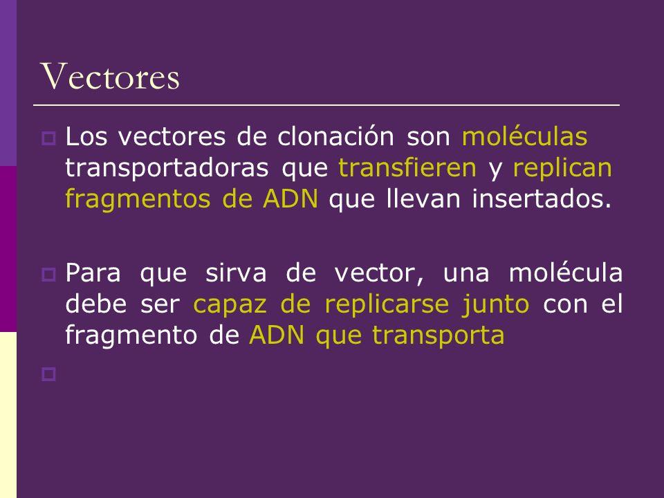 Vectores Los vectores de clonación son moléculas transportadoras que transfieren y replican fragmentos de ADN que llevan insertados.