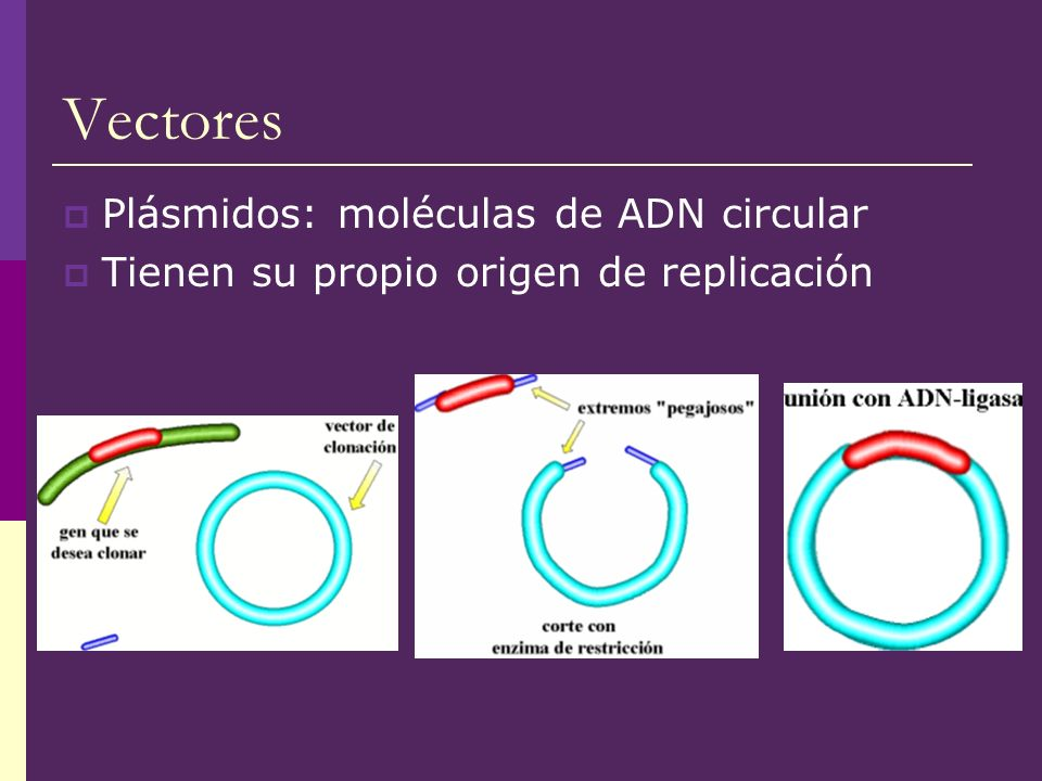 Vectores Plásmidos: moléculas de ADN circular