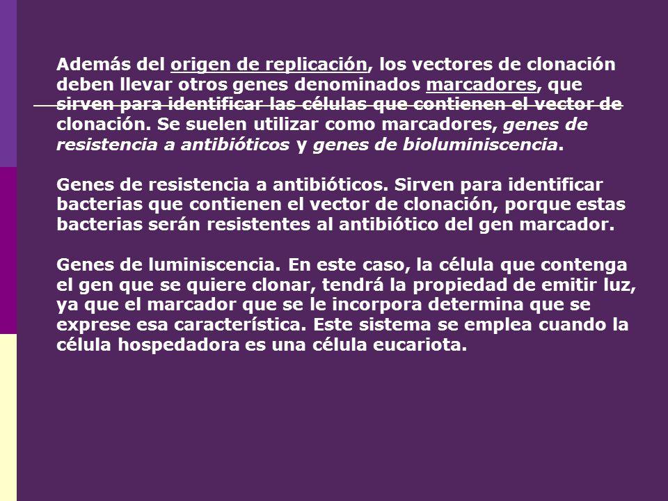 Además del origen de replicación, los vectores de clonación deben llevar otros genes denominados marcadores, que sirven para identificar las células que contienen el vector de clonación. Se suelen utilizar como marcadores, genes de resistencia a antibióticos y genes de bioluminiscencia.