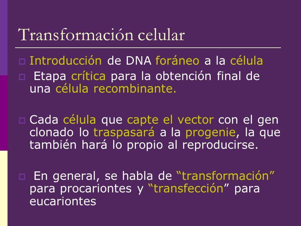 Transformación celular