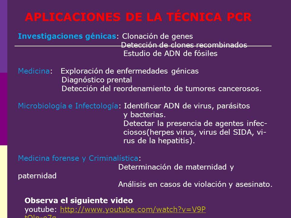 APLICACIONES DE LA TÉCNICA PCR