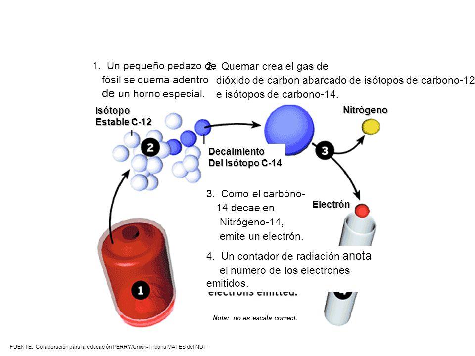 dióxido de carbon abarcado de isótopos de carbono-12