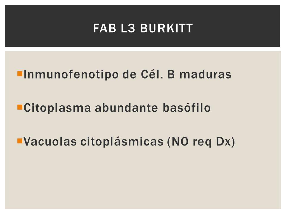 FAB L3 Burkitt Inmunofenotipo de Cél. B maduras. Citoplasma abundante basófilo.