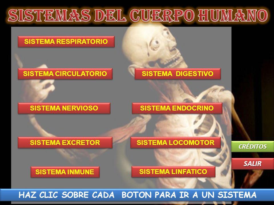 SISTEMAS DEL CUERPO HUMANO - ppt video online descargar