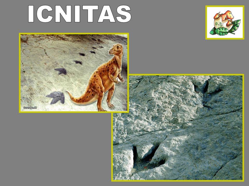 ICNITAS