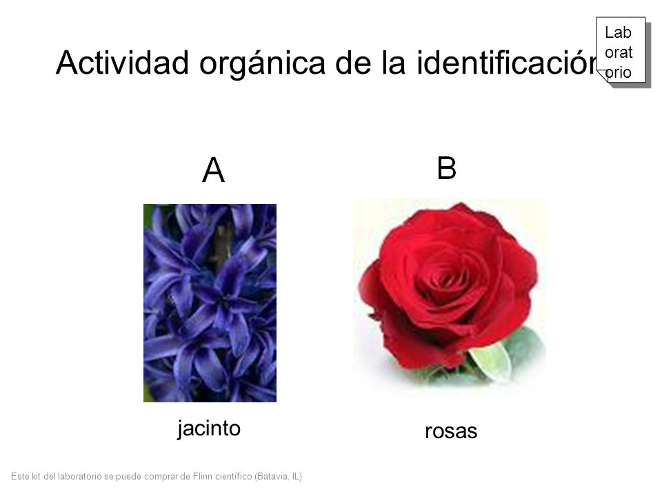Actividad orgánica de la identificación