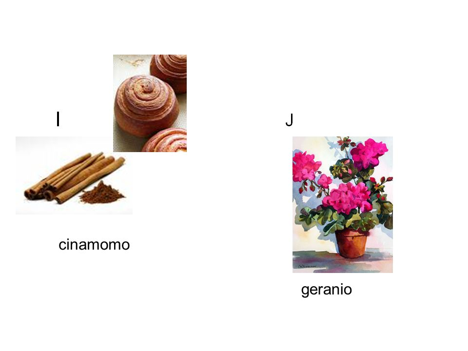 cinamomo geranio