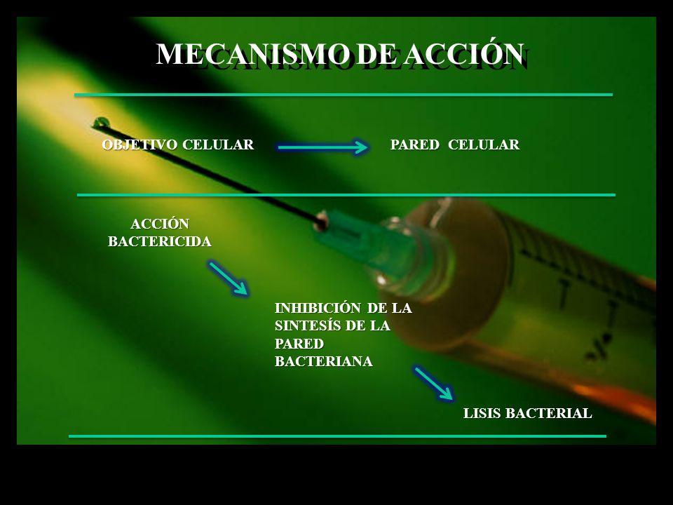 MECANISMO DE ACCIÓN OBJETIVO CELULAR PARED CELULAR ACCIÓN BACTERICIDA