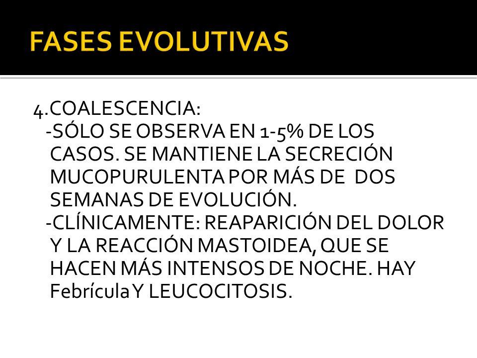 FASES EVOLUTIVAS