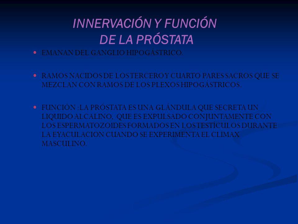 INNERVACIÓN Y FUNCIÓN DE LA PRÓSTATA