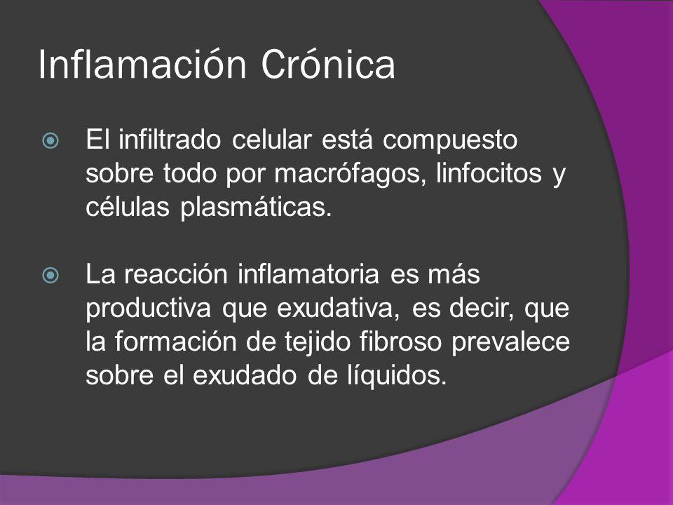 Inflamación CrónicaEl infiltrado celular está compuesto sobre todo por macrófagos, linfocitos y células plasmáticas.