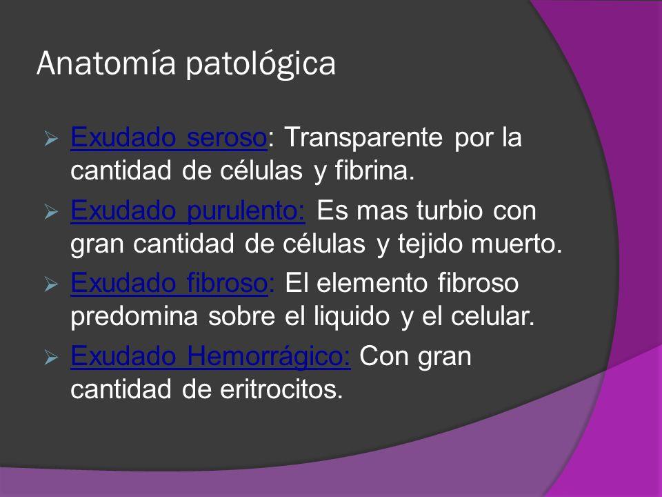 Anatomía patológica Exudado seroso: Transparente por la cantidad de células y fibrina.