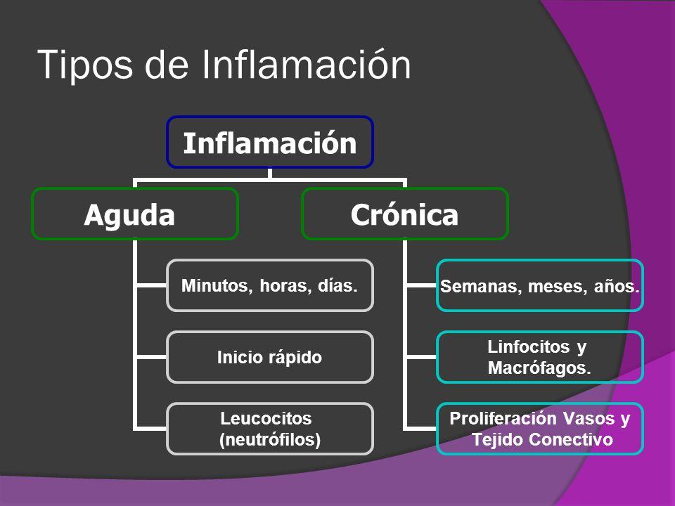 Tipos de Inflamación